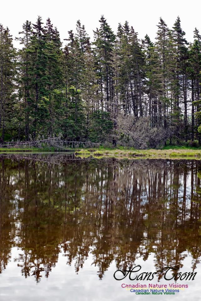 Troop Island Pond