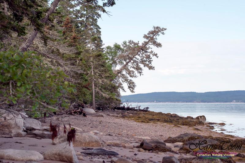 Troop Island Shoreline