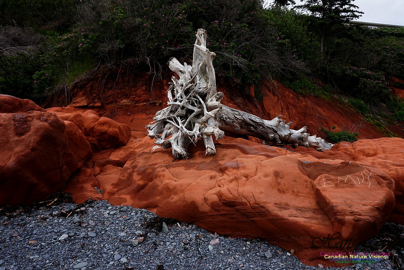 Red Rocks and Driftwood 101