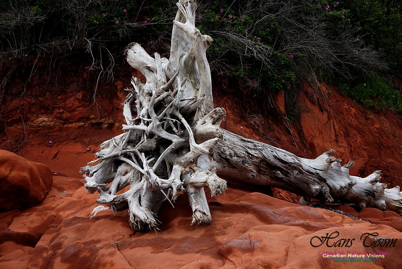 Red Rocks and Driftwood 102