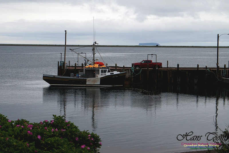 Lobster Boat Advocate Dock High Tide 101
