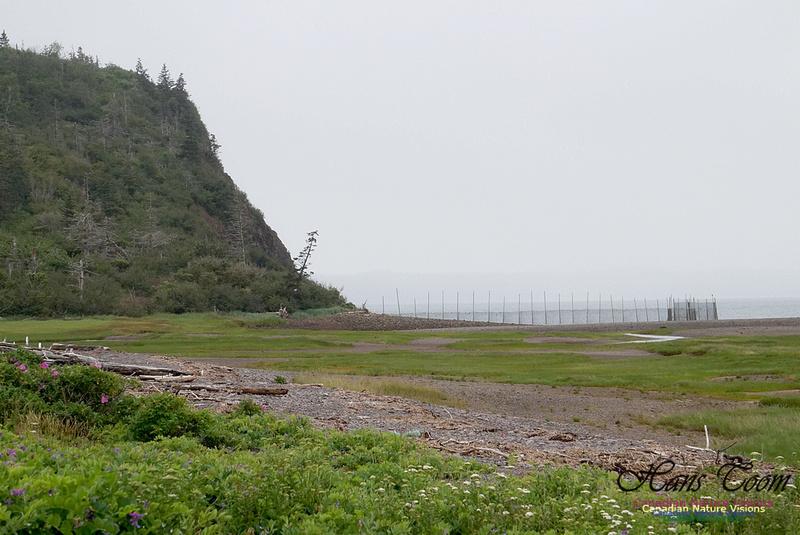 Partridge Island 104