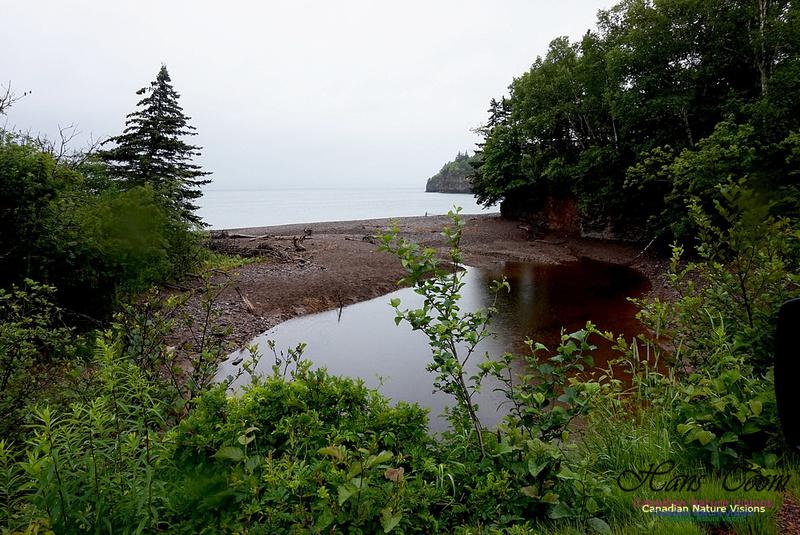 Seaside Pond 100