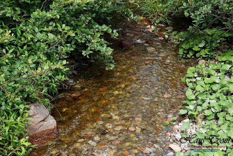 McGahey Brook Canyon Trail 100