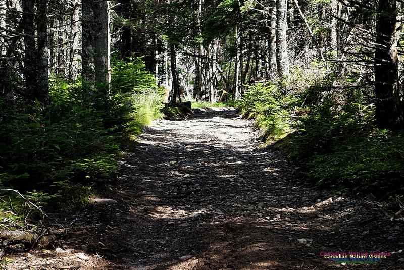 McGahey Brook Canyon Trail 103