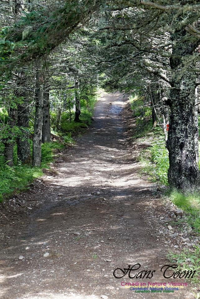 McGahey Brook Canyon Trail 102