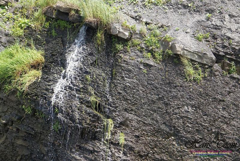 Joggins Fossil Cliffs 102