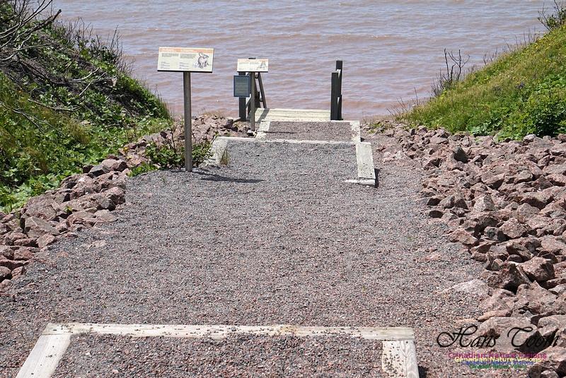 Joggins Fossil Cliffs 100
