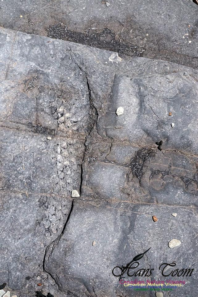 Joggins Fossil Cliffs 111