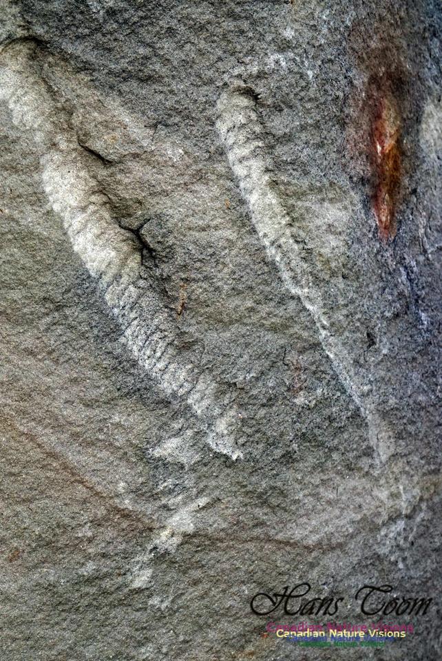 Joggins Fossil Cliffs 117