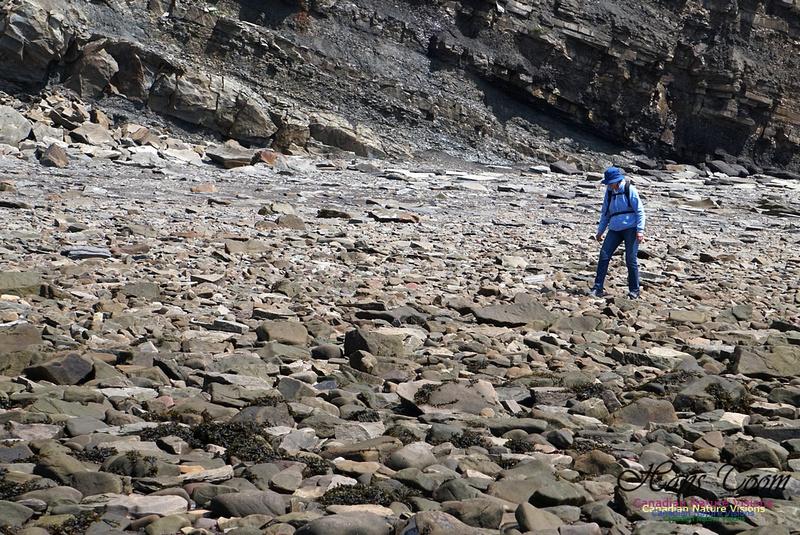 Joggins Fossil Cliffs 116