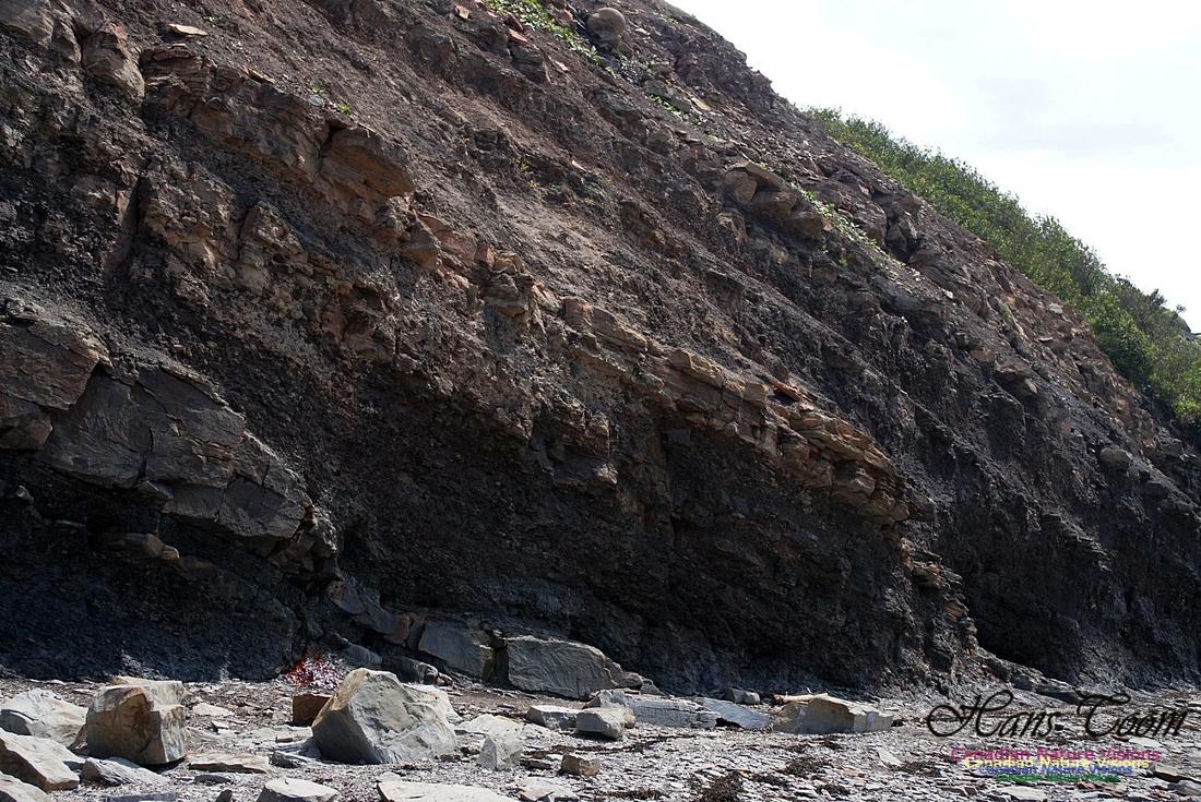 Joggins Fossil Cliffs 106