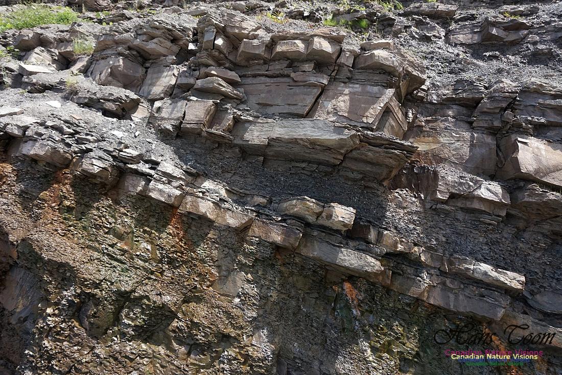 Joggins Fossil Cliffs 112