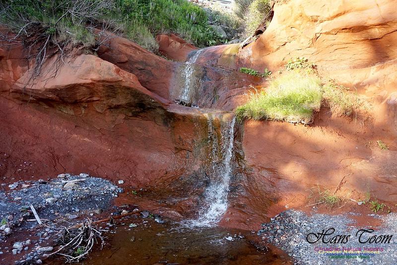 Waterfall at Red Rocks 103
