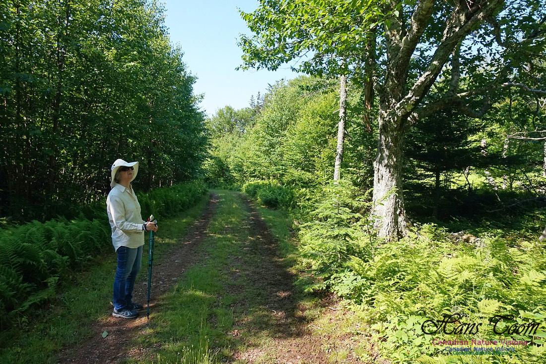 Three Sisters Trail 105