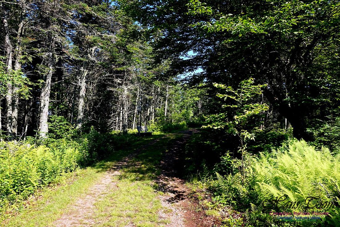 Three Sisters Trail 109