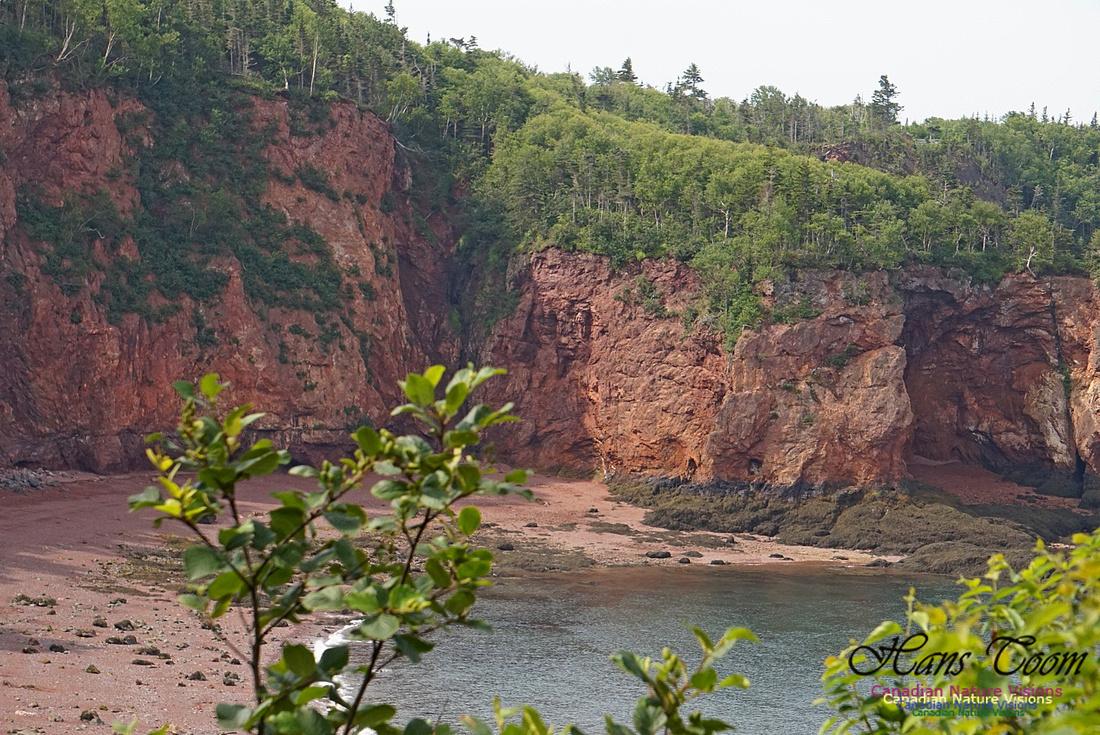 Anderson's Cove 102