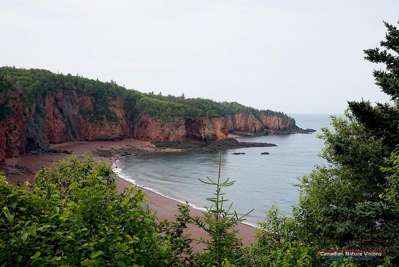Andersonès Cove 100