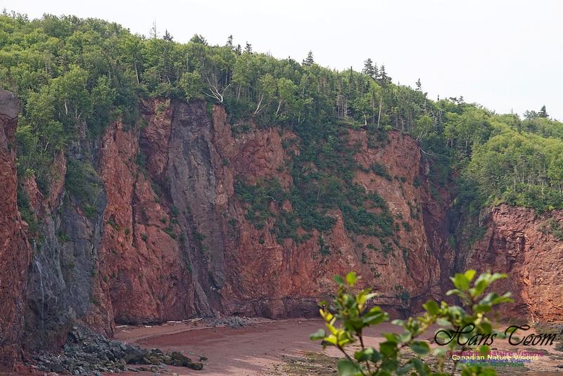 Anderson's Cove 103
