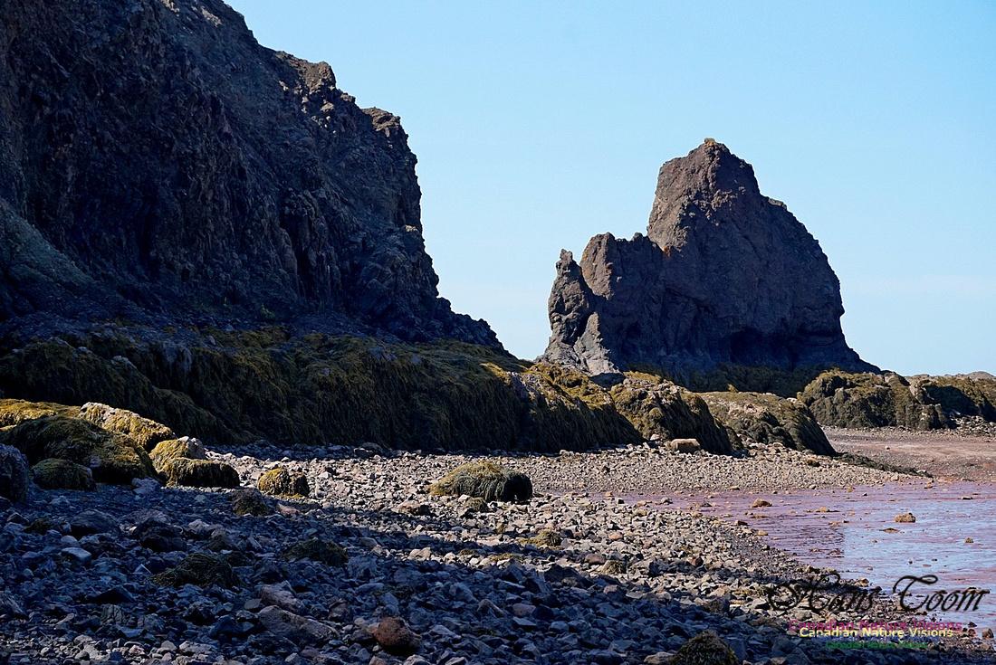 Five Islands Provincial Park 111