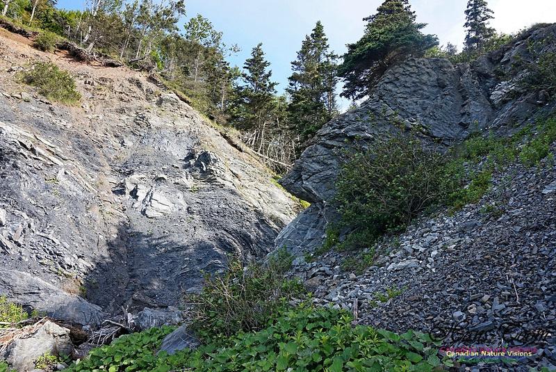 Fundy Ridge Trail 104