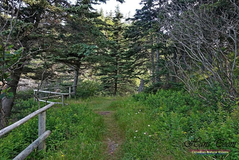 Fundy Ridge Trail 105