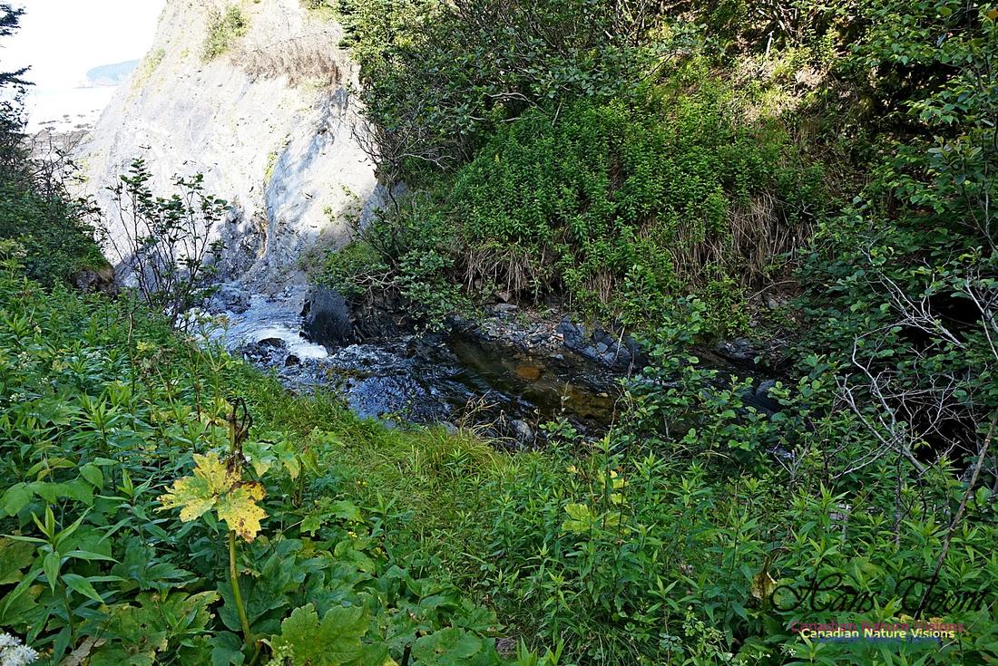 Fundy Ridge Trail 108