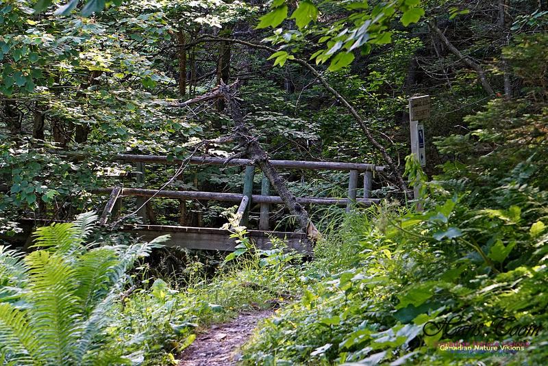 Fundy Ridge Trail 109