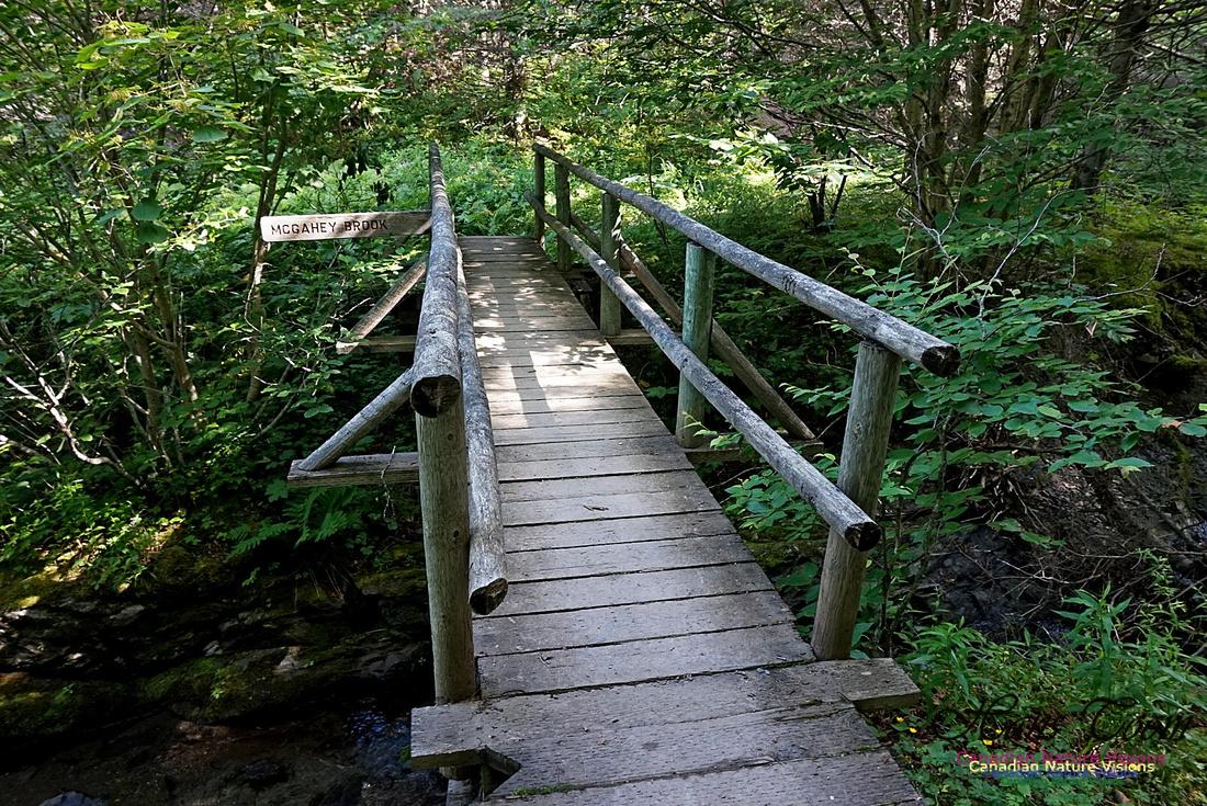 Fundy Ridge Trail 110