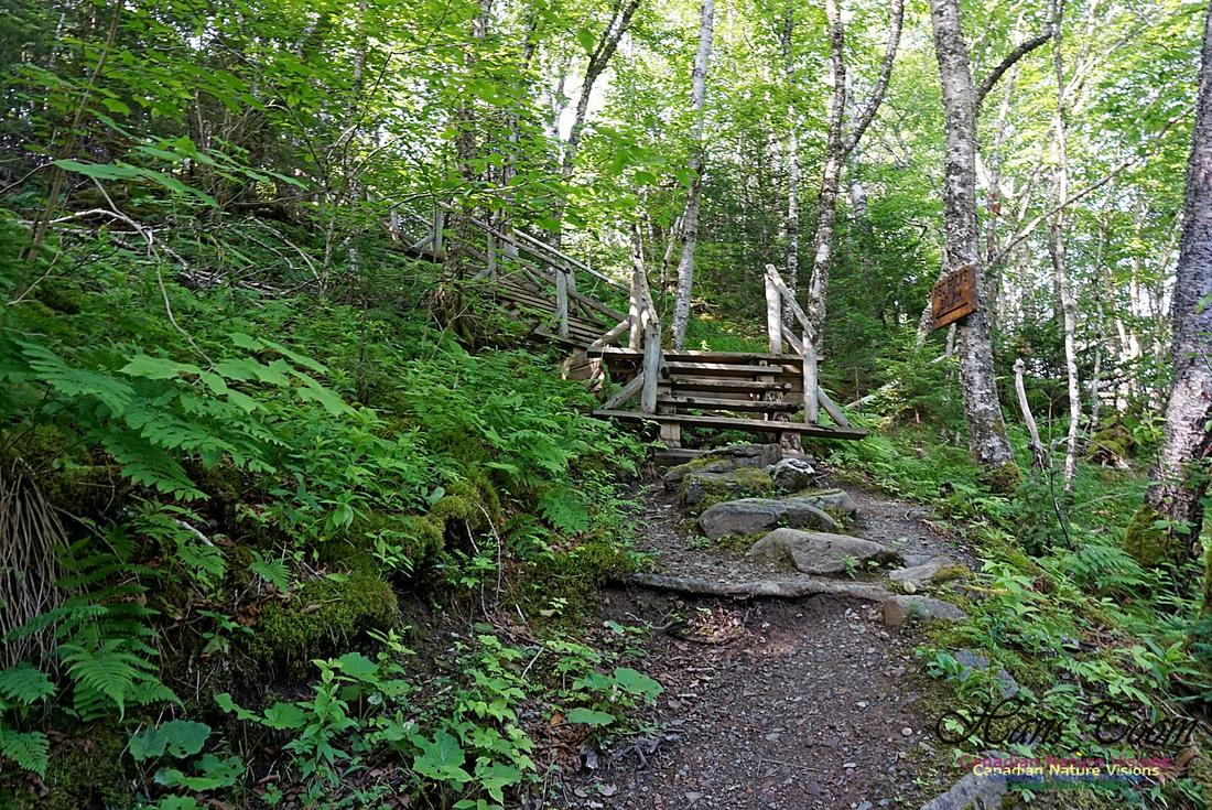 Fundy Ridge Trail 111