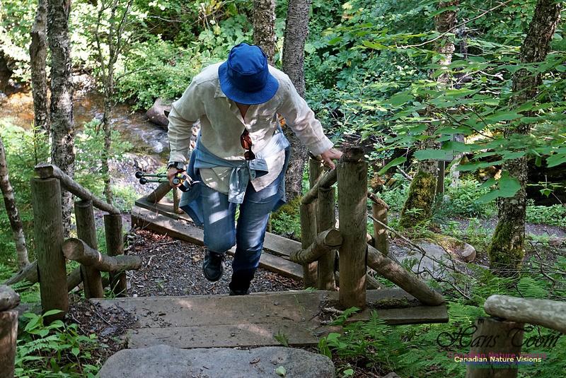 Fundy Ridge Trail 113