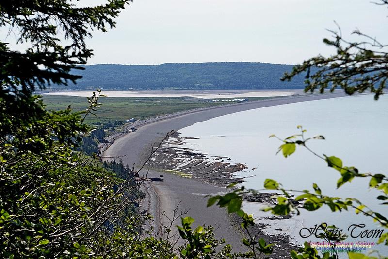 Fundy Ridge Trail 121