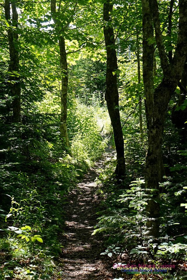 Fundy Ridge Trail 124