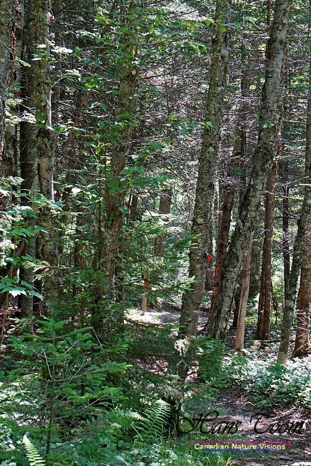 Fundy Ridge Trail 125