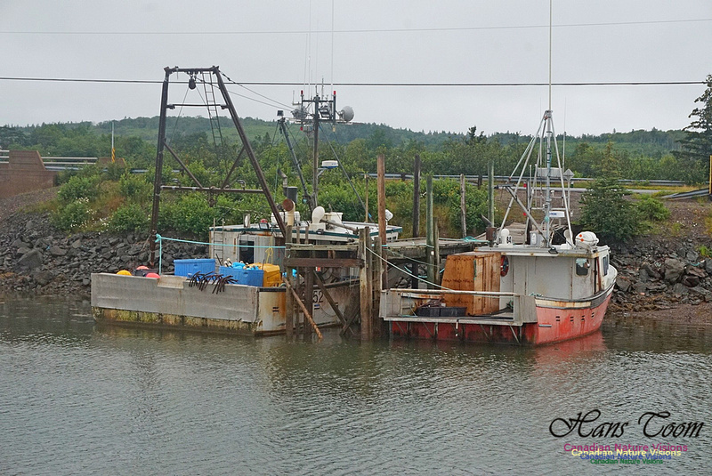 Dockside 227
