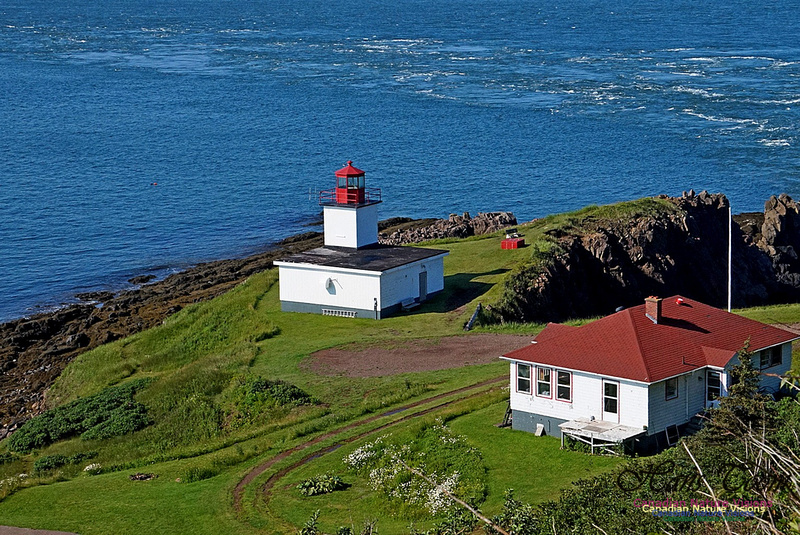 Cape d'Or Light 230