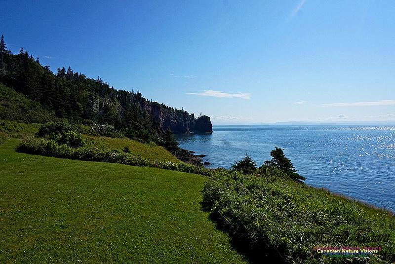 Cape d'Or Coastal Cliff 238