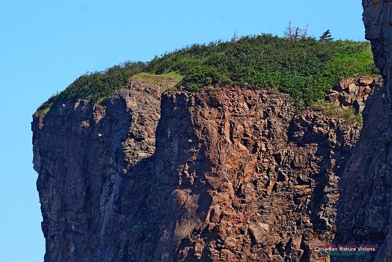 Cape d'Or Coastal Cliff 237