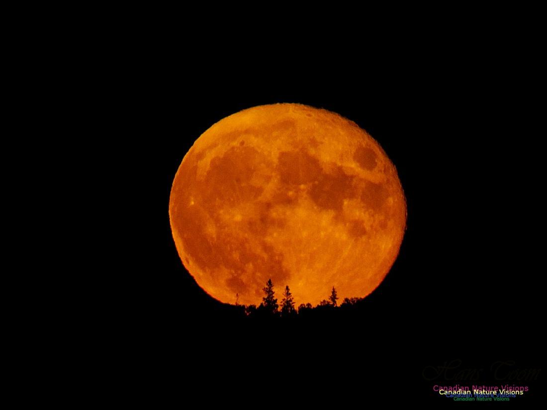 Moonrise 2402