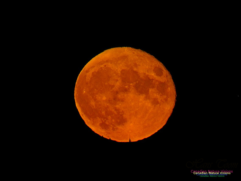 Moonrise 2403