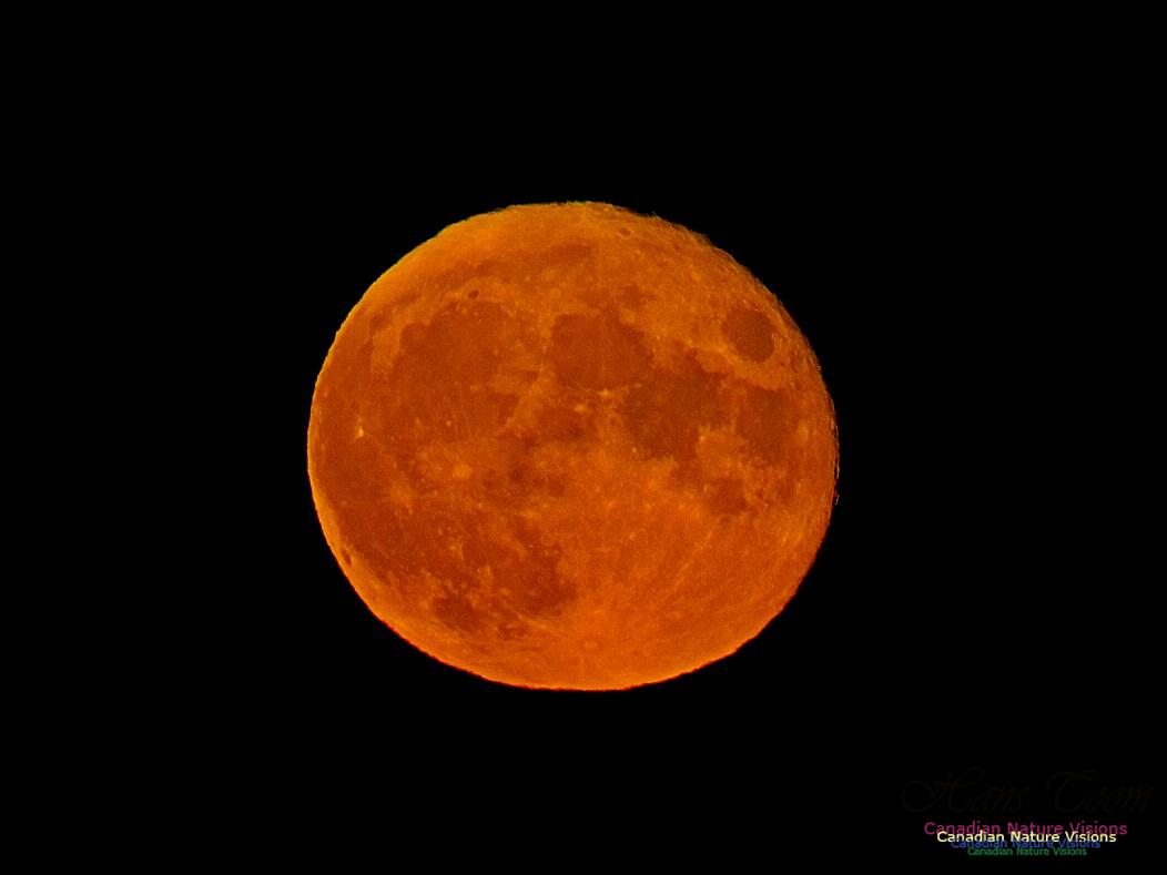 Moonrise 2404