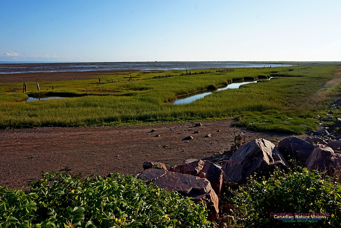 Acadian Dyke at Advocate Harbour 2401