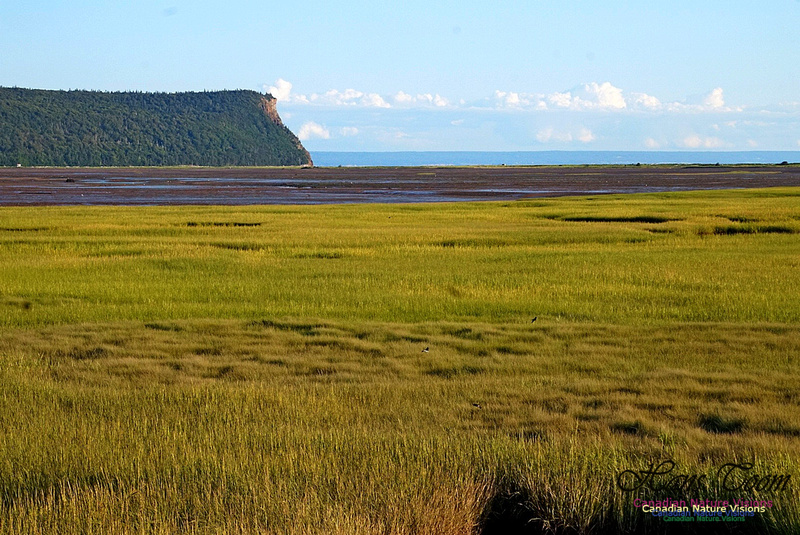 Acadian Dyke at Advocate Harbour 2505