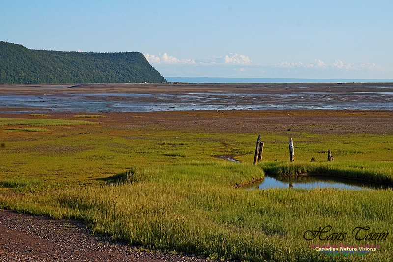 Acadian Dyke at Advocate Harbour 2403