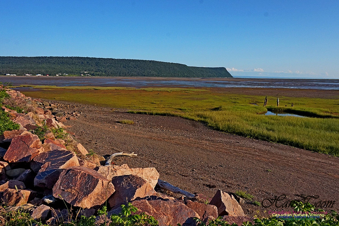 Acadian Dyke at Advocate Harbour 2402