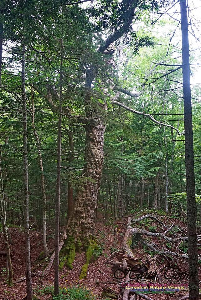 Chignecto National Wildlife Area 2705