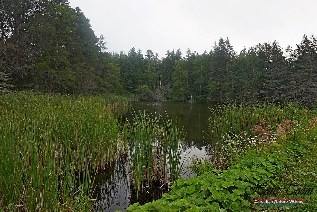 Chignecto National Wildlife Area 2710