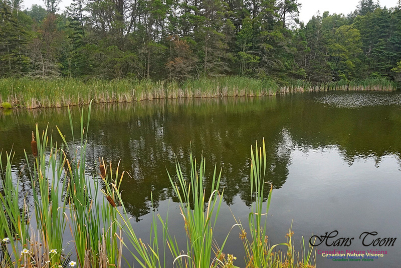 Chignecto National Wildlife Area 2711