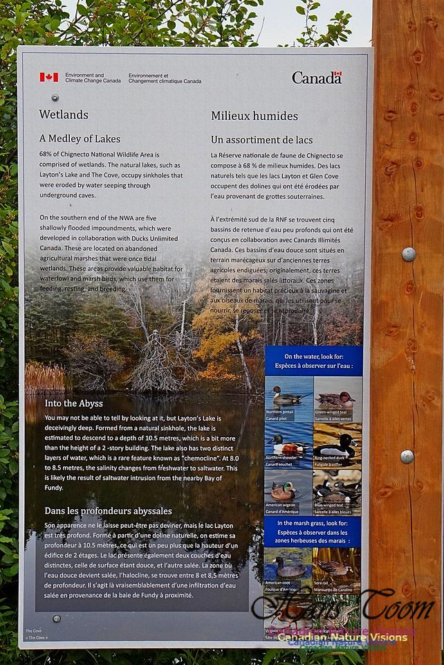 Chignecto National Wildlife Area 2718