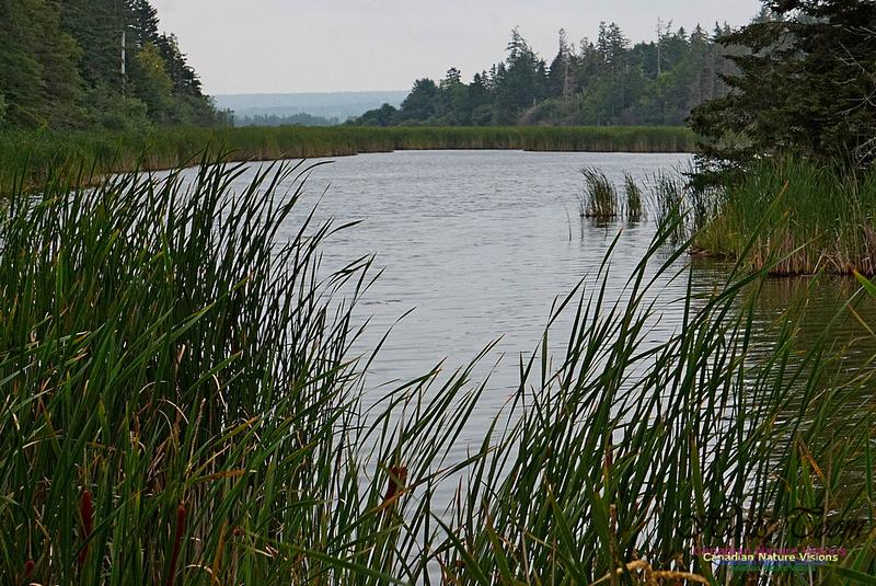 Chignecto National Wildlife Area 2720